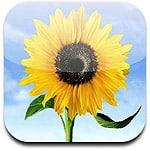 Sharing Multiple Photos on iOS