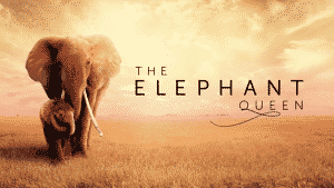'The Elephant Queen' Trailer Released Ahead of Apple TV+ Debut