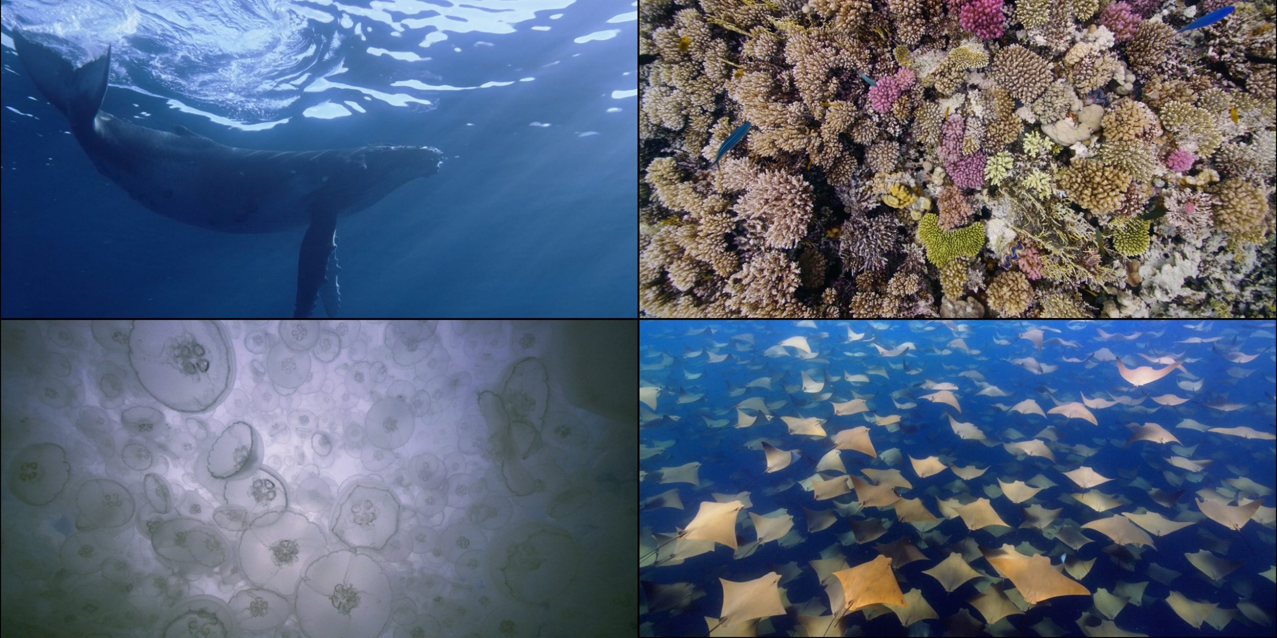 New Batch of Video Screensavers for Apple TV Released